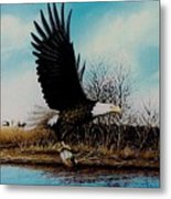 Eagle With Decoy Metal Print