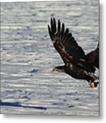 Eagle_7894 Metal Print