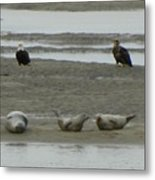 Eagles And Seals Metal Print