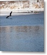 Eagles On The Fox - 1 Metal Print