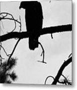 Eaglet Silhouette Metal Print