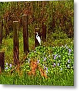Egret And Heron Metal Print