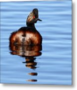 Eared Grebe Reflecting On Calm Water Metal Print