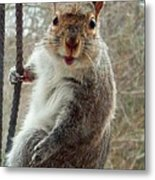Earl The Squirrel Metal Print