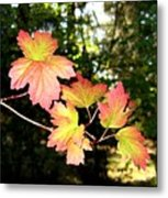 Early Days Of Autumn Metal Print