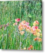Early Fall Color Metal Print