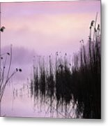Early Morning By The Pond  Metal Print