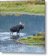 Early Morning Crossing In Grand Teton Metal Print