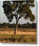Early Morning Feed Metal Print