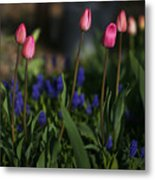Early Morning Garden Metal Print