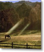 Early Morning Grazing Metal Print