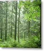 Early Morning In Swiss Forest Metal Print