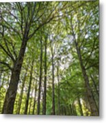 Early Morning In The Forest Metal Print