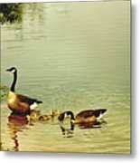 Early Morning Lessons Metal Print