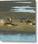 Early Morning Relaxation Metal Print