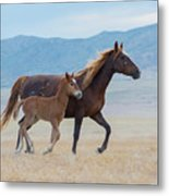 Early Morning Run Metal Print by Nicole Markmann Nelson