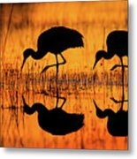 Early Morning Sandhill Cranes Metal Print