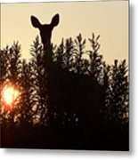 Early Morning Visitor Metal Print