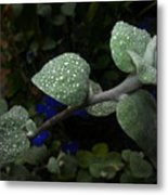 Early Morning Water Droplets Metal Print
