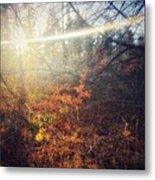 Early Morning Winter Sun Metal Print