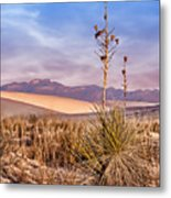 Early Morning Yucca - White Sands - New Mexico Metal Print