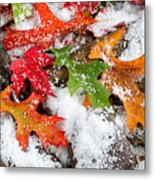 Early Snow During Autumn  Metal Print