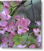 Early Spring Color Metal Print