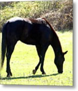 Early Spring Grazing Metal Print