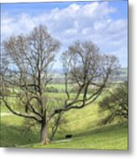 Early Spring On Steryning Bowl Metal Print