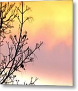 Early Spring Sunset Metal Print