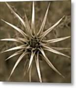 Early Thistle Metal Print