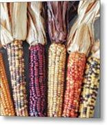 Ears Of Indian Corn Metal Print