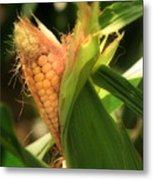 Ear's To You Corn Metal Print