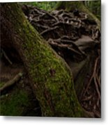 Earth Day 2012 Metal Print by Maria Suhr