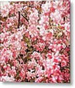 Earth Tones Apple Blossoms  Metal Print