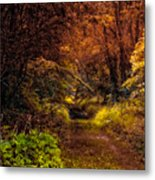 Earth Tones In A Illinois Woods Metal Print