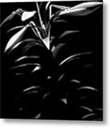 Easter Lily Two Metal Print