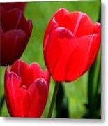 Easter Tulips Metal Print