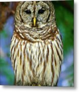 Eastern Barred Owl Metal Print