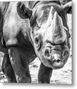 Eastern Black Rhinoceros Metal Print