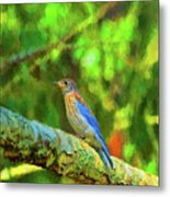 Eastern Blue Bird With Flair Metal Print