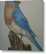Eastern Bluebird Metal Print by Ginny Youngblood