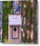 Eastern Bluebird Perched On Birdhouse 3 Metal Print