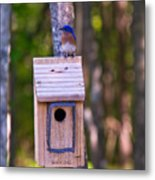 Eastern Bluebird Perched On Birdhouse 4 Metal Print
