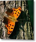 Eastern Comma Butterfly Metal Print
