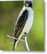 Eastern Kingbird Stare Metal Print