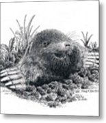 Eastern Mole Metal Print