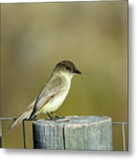 Eastern Phoebe At Falcon State Park Of Texas Metal Print
