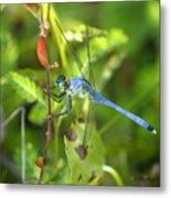 Eastern Pondhawk Dragonfly Metal Print
