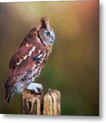 Eastern Screech Owl Red Morph Profile Metal Print